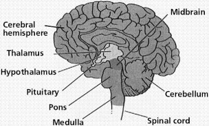 CNS diagram